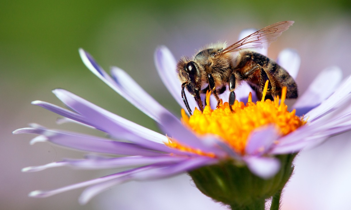 Slikovni rezultat za bees