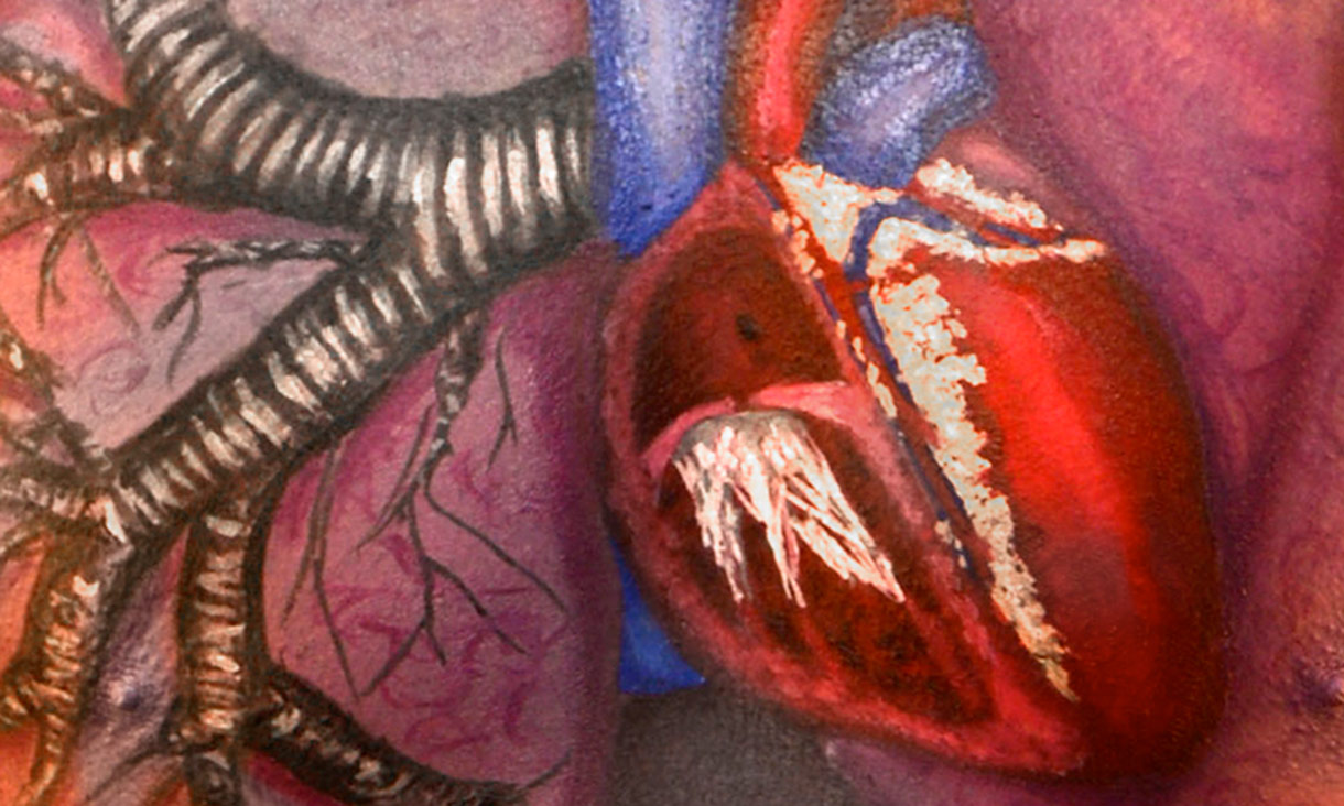 Anatomical painting of heart and lung on body