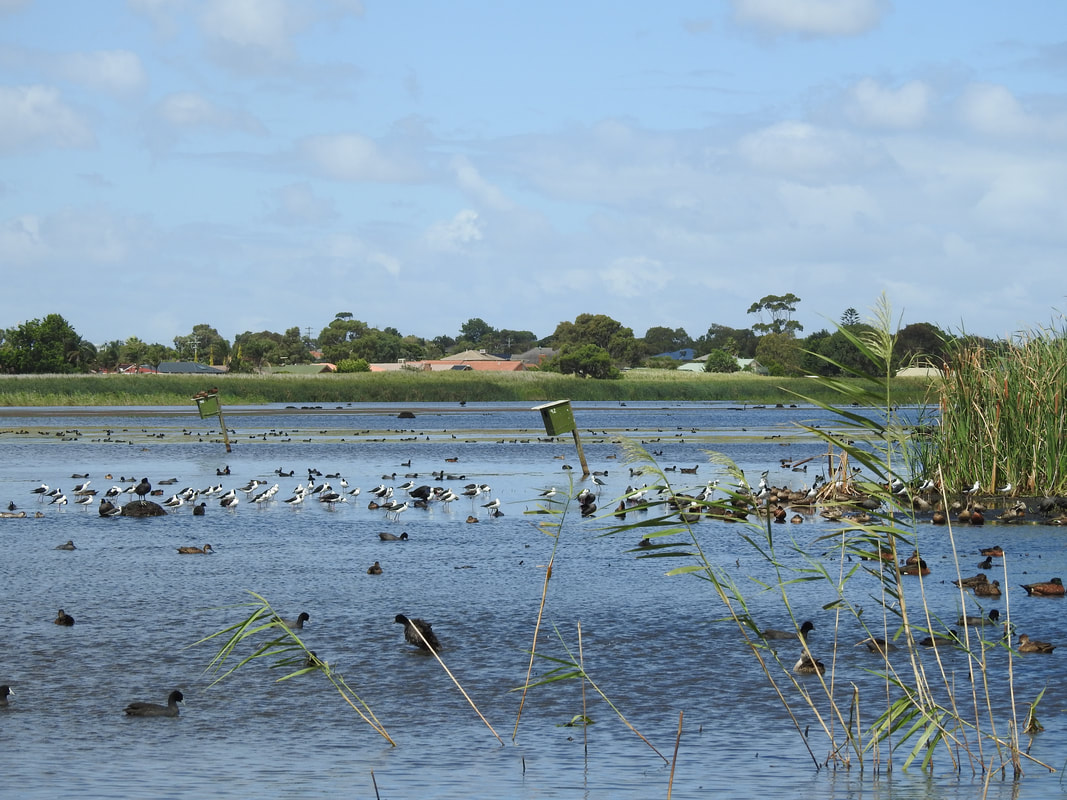 Edithvale and Seaford Wetlands