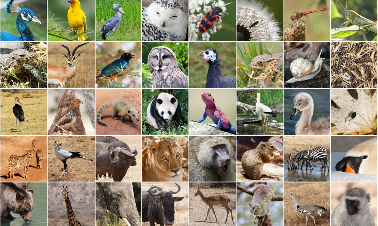 What's your favourite animal? Researchers want to know