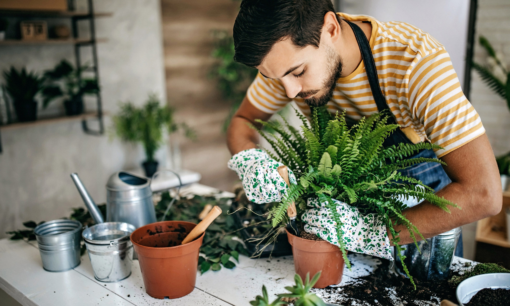 Man taking care of his plants at home