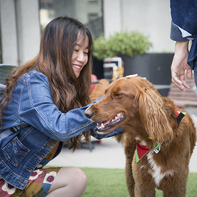 RMIT student with Ziggy the therapy dog