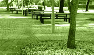 benches and trees